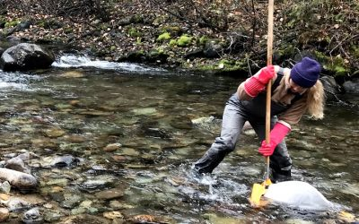 $2.6M STREAM project uses DNA technology to assess freshwater health in Canada