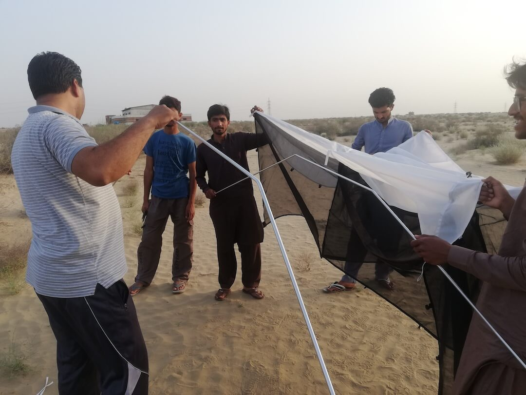 Malaise trap setup in the Cholistan Desert, Pakistan. PHOTO CREDIT: Santosh Kumar