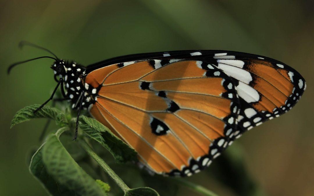 iBOL Invites You to #illuminateBiodiversity for Earth Day
