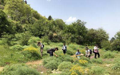Scat Raiders Unravel Animal-Plant Interactions in Lebanon Using DNA Barcoding Tools