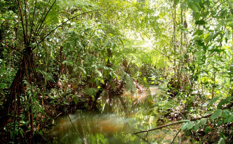 Discovering a resilient and hyperdiverse midge fly fauna in a Singaporean swamp forest