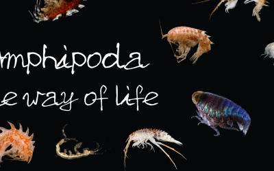 Fifty years of amphipod meetings and counting!