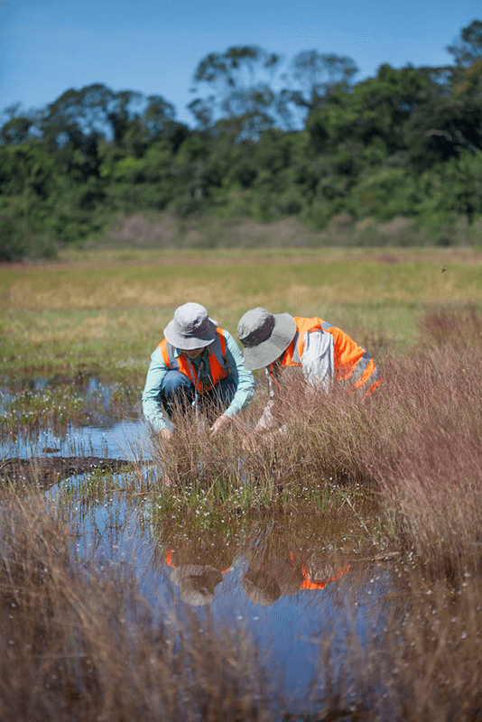 Botanists collecting samples