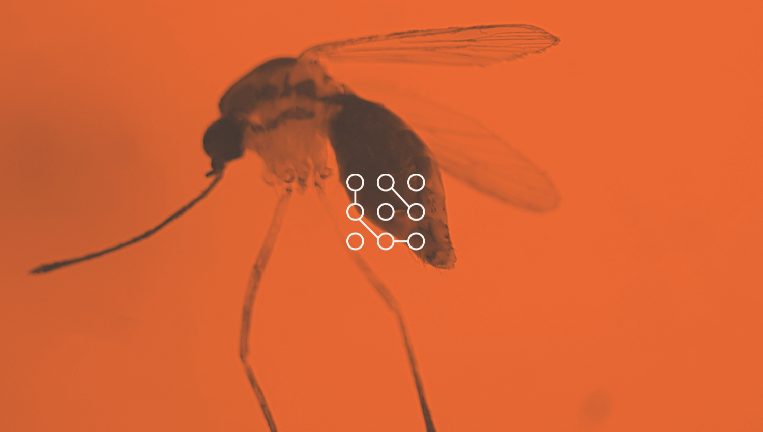 Stylized Diptera graphic.