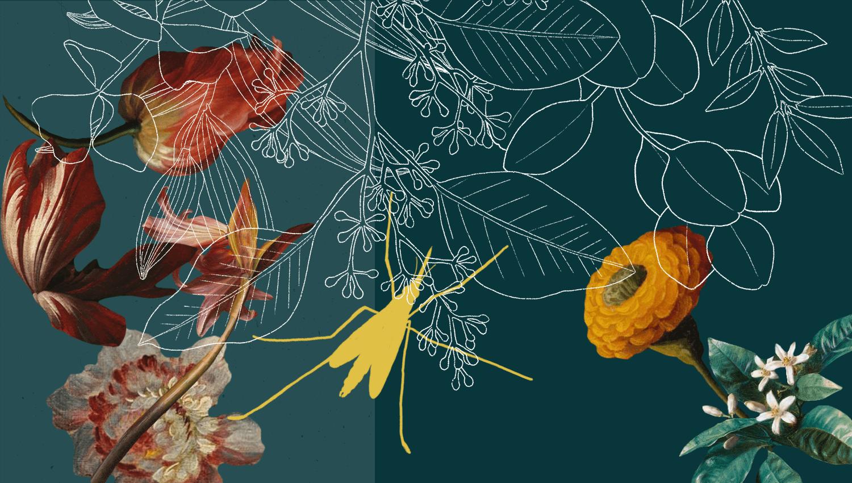 Stylized Diptera graphic.