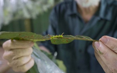 Centre for Biodiversity Genomics Awarded $4 Million to Catalogue Life in Costa Rica
