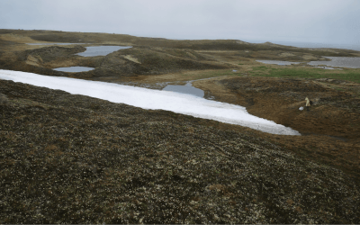 Arctic BIOSCAN: Survey of an Arctic Arthropod Community and Implications for Future Monitoring