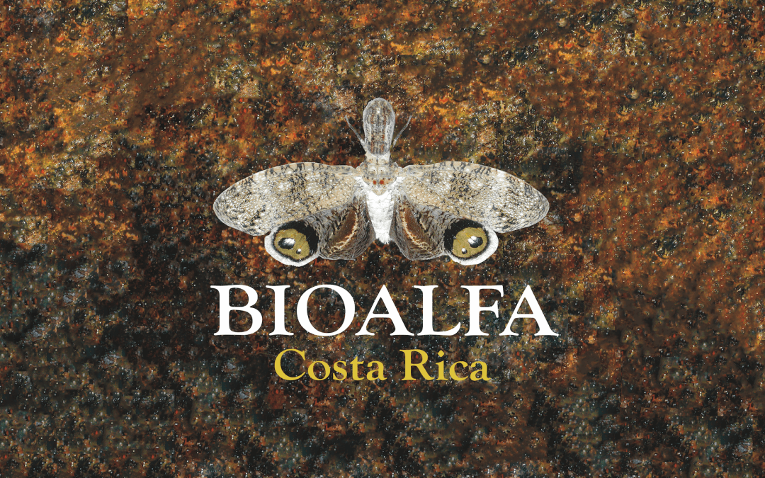 Webinar: DNA barcodes, BioAlfa, and the study of insect diversity in Costa Rica